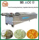 Máquinas para processamento de produtos hortícolas máquina de Branqueamento