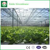 Camada única/isolantes/Intelligent/vidro temperado para efeito de estufa Flower/vegetais/frutas/Plantio/Fazenda/Aquicultura/Pecuária/Restaurante Ecológicos