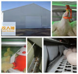 StahlConstruction in Poultry House mit Installation