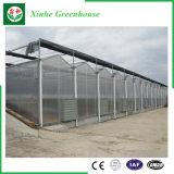 Invernadero de la PC-Hoja de Xinhe- para Onvsale agrícola y comercial