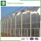 Invernadero de aluminio de la hoja de la PC del perfil del acero inoxidable de la agricultura