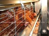 Matériel automatique de vente chaude dans la Chambre de volaille avec la construction préfabriquée de Chambre pour le poulet