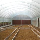 De hete Verkopende Serre van de Spanwijdte van de Landbouw Enige met de Directe Verkoop van de Fabriek