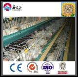 Landbouwbedrijf van de Kip van de Kwaliteit van de Lage Kosten van het Merk van Xgz het Beroemde Beste (xgz-GR012)