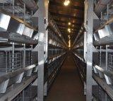 Оборудование для птицеводства H тип аккумуляторной батареи цыпленок слой клеток