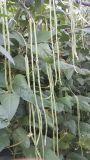 野菜に植わることのUnigrowの植物成長の調整装置
