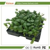Ménage Keisue végétales/bac de culture hydroponique de plus en plus de fleurs