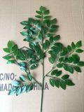 Künstliche Pflanzen und Blumen des silbernen Ficus Gu-Jy902121641
