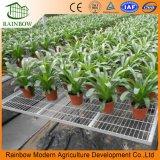Seedbeds mobili della serra agricola per la pianta e le verdure