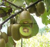 工場供給の有機性自然なフルーツはキーウィフルーツの粉のキーウィフルーツジュースの粉を得る