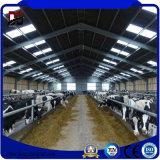 Exploração agrícola diária barata da vaca dos edifícios de frame de aço para a venda