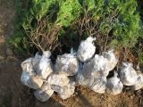 농업 정원을%s 100% PP Spunbond 부직포