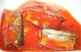 Ingeblikte Mackerel in Tomatensaus 425g/155g