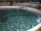 Tank van de Vissen van /Round van de Tank van de Vissen van de Viskwekerij van de glasvezel FRP De Plastic