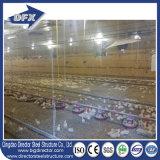 Breeding бройлера фермы цыпленка высокого качества светлый стальной