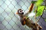 높은 안전 스테인리스 동물원 메시 담