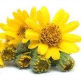 Порошок выдержки выдержки арники/цветка /Arnica порошка Монтаны арники