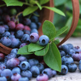 Zelang Supply Natural Blueberry Juice Powder Blueberry