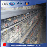 Matériel automatique de ferme avicole à vendre en Afrique