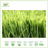 Het ISO Verklaarde Poeder van uitstekende kwaliteit van het Sap van het Gras van de Gerst/van de Tarwe