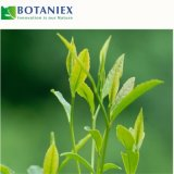 血の脂肪質の負けた重量を減らすDecaffeinated緑茶のエキス