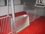High quality double simmers Pig Feeder 304 Stainless Pig equipment Long term Usage