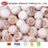 La nouvelle récolte de qualité supérieure Champignon de champignon