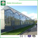 Glasgewächshaus-Plastikgewächshaus PC Blatt-Gewächshaus für Erdbeere und Rose