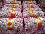 Aglio bianco puro di bianco cinese del nuovo raccolto dell'esportazione