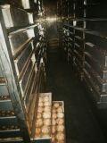 400kg 수용량의 까만 마늘 기계