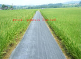 Prodotto non tessuto intessuto erba del geotessuto della stuoia