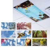 Especial paisaje LED Panel de luz con diferentes imágenes para la decoración