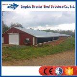 Edificio de la granja avícola del pollo del bajo costo