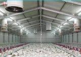 Le Poulet à la Chambre d'utilisation de la couche de matériel en acier de la volaille Structure métallique bâtiment agricole