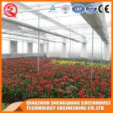 Дом коммерчески цветка Venlo Vegetable/Hydroponic стеклянная зеленая