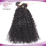 Venda de fábrica de qualidade superior Encaracolado Virgem humanos malaio trama de cabelo