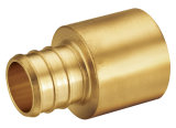 Encaixes do bronze dos encaixes da inserção de Pex