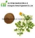 Extrait d'herbes Gran Calandine 4: 1 ~ 20: 1 pour supplément alimentaire