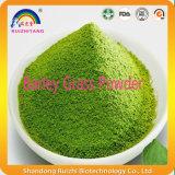 Polvo de calidad superior natural de la hierba de cebada del certificado ISO9001