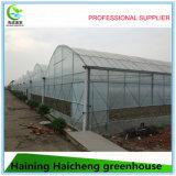필름 토마토 식물성 꽃 설치를 위한 Hydroponic 녹색 집 공급자
