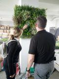 2017 новый дизайн Искусственные растения стены с УФ защитой