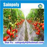 PE de Plastic Grote Serre van de Tunnel voor de Tomaten van de Landbouw