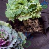 Sacos não tecidos do Polypropylene biodegradável do Seeding, agricultura do Nonwoven de Spunbonded do Polypropylene da matéria- prima