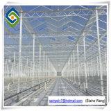 De commerciële Hydroponic Serre van het Glas van Systemen voor Tomaat
