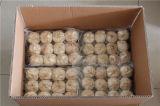 Aditivo livre exportação Garlic-Professional Preta
