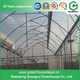 La serre de scie à coques couverte de PC agricole de haute qualité est fabriquée en Chine