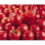 Extrait de tomate, tomate extraire le lycopène, Naturel Le lycopène en poudre