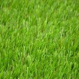 Natural Verde césped artificial de alfombras de césped sintético (CS)