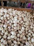 sacchetto della maglia 10kg che imballa aglio bianco normale fresco