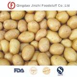 De bonne qualité d'alimentation de l'usine l'exportation de pommes de terre fraîches
